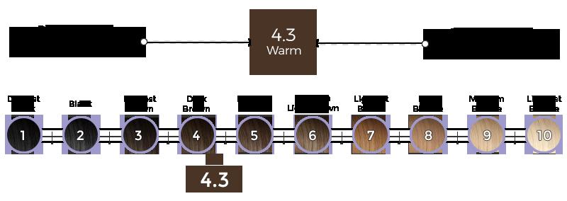 4-3-roma-brown